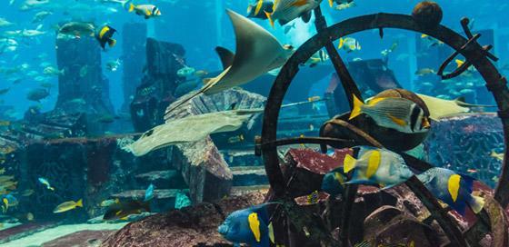 Vissen-duiken in de winter-particulier